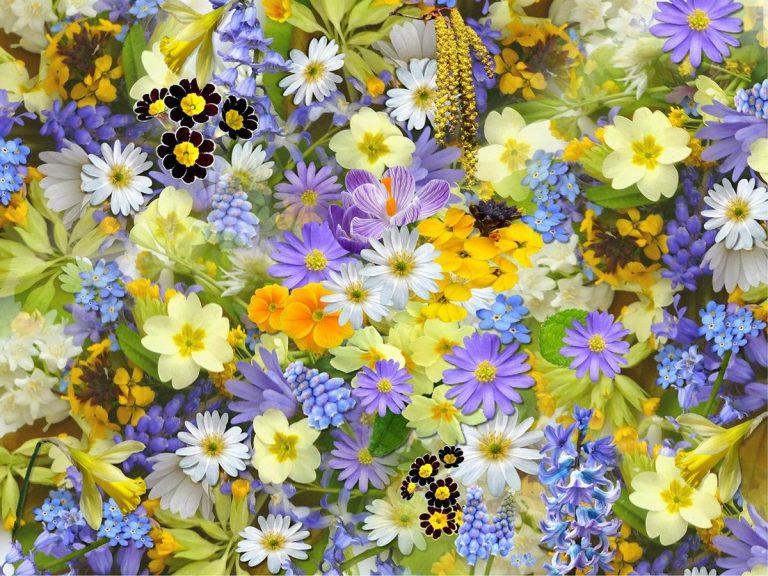 Piękne i ulubione kwiaty, które kwitną przez cały rok