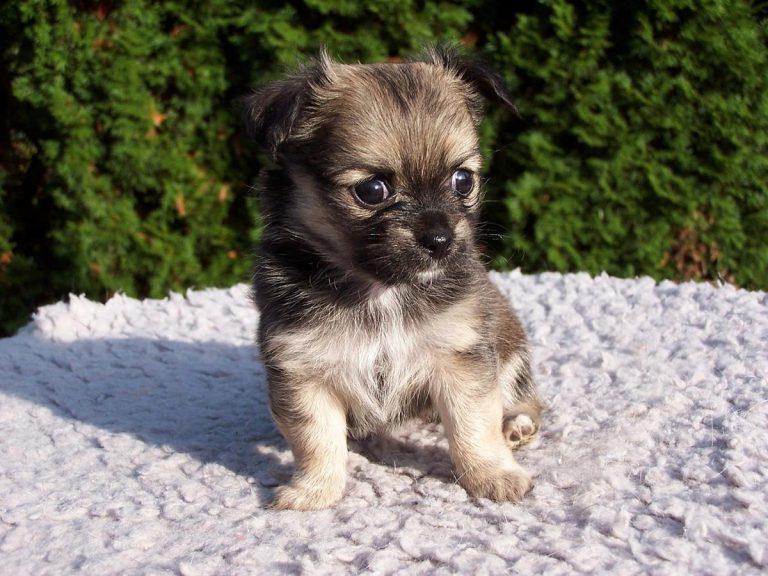 Proste porady i wskazówki dotyczące opieki nad psem