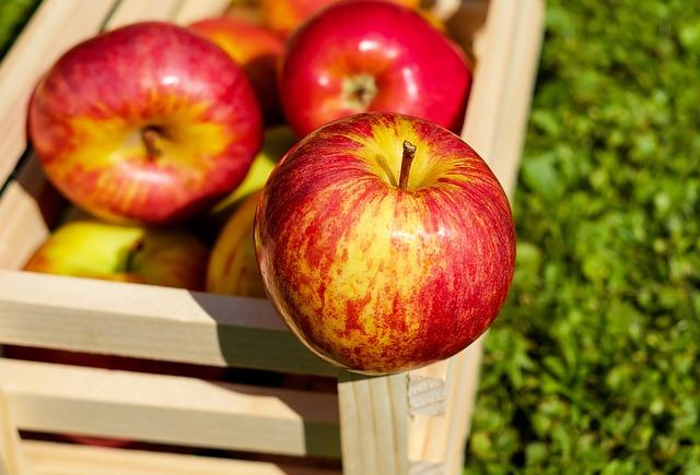 Gdzie zdobędziemy wiedzę na temat ochrony pomidorów w chłodni?